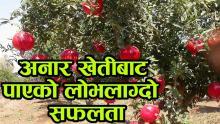 Embedded thumbnail for अनार खेतीबाट पाएको लोभलाग्दो सफलता || Youba Sarokar Episode 1 || युवा सरोकार भाग १
